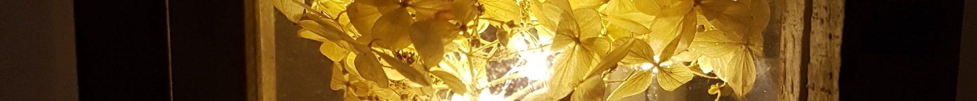 BuMa informiert: HunUnf-Verbot wegen Corona gekippt